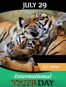 international tiger day 29 july